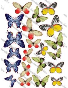 Imagine comestibila fluturi - 6