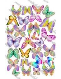 Imagine comestibila fluturi - 7
