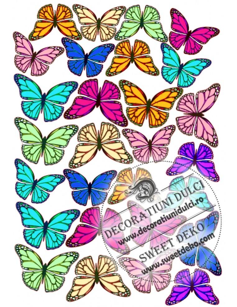 Fluturi colorati